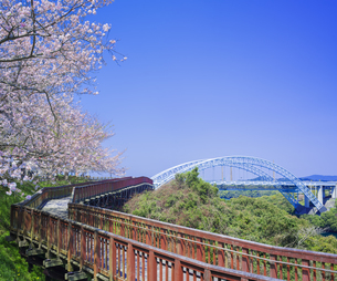 長崎県 桜 西海橋 (西海橋公園) の写真素材 [FYI04311554]