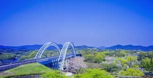 長崎県 桜 新西海橋 (西海の丘公園) の写真素材 [FYI04311565]