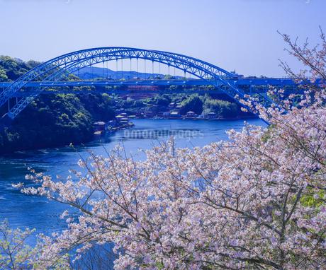 長崎県 桜 新西海橋 (西海橋公園) の写真素材 [FYI04311566]