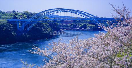 長崎県 桜 新西海橋 (西海橋公園) の写真素材 [FYI04311567]