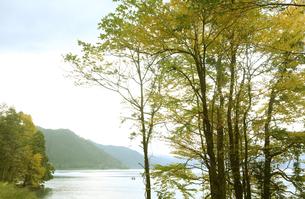 紅葉の十和田湖の写真素材 [FYI04311612]