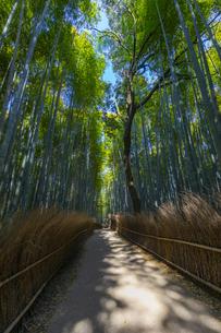 京都の竹林の小径の写真素材 [FYI04311615]