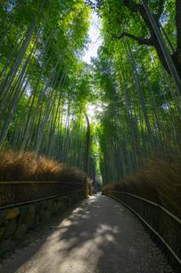 京都の竹林の小径の写真素材 [FYI04311617]