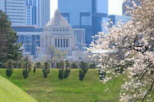 国会議事堂と桜の写真素材 [FYI04311629]