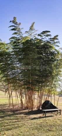 青空と竹の写真素材 [FYI04311649]