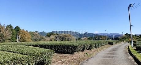 茶畑の写真素材 [FYI04311662]