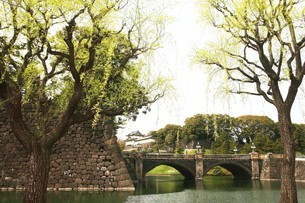 皇居・皇居前広場に芽吹く柳の写真素材 [FYI04311754]