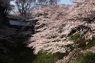 皇居・田安門に咲く桜の写真素材 [FYI04311758]