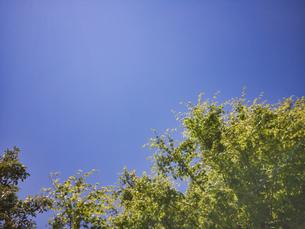 2020 4月の青空と植樹の写真素材 [FYI04311780]
