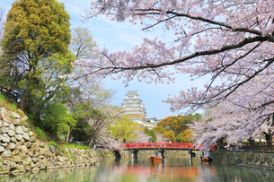 姫路城天守と桜に観光学習船の写真素材 [FYI04311791]