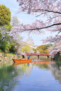 姫路城天守と桜に観光学習船の写真素材 [FYI04311792]
