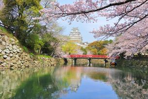 姫路城天守と赤い橋に桜の写真素材 [FYI04311793]