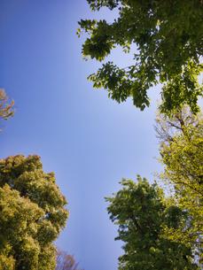 2020 4月の青空と植樹の写真素材 [FYI04311795]