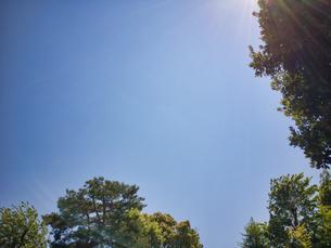 2020 4月の青空と植樹の写真素材 [FYI04311809]
