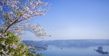 長崎県 桜 大山公園 の写真素材 [FYI04312054]