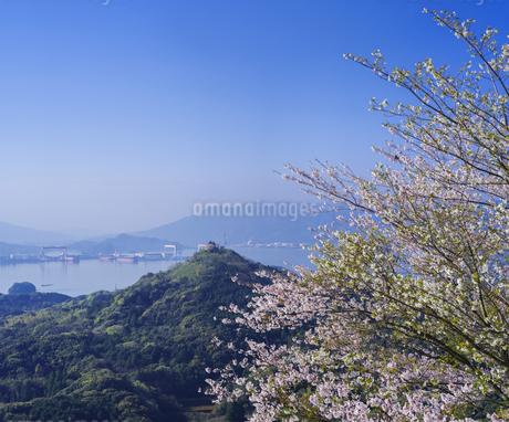 長崎県 桜 大山公園 の写真素材 [FYI04312058]