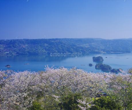 長崎県 桜 大山公園 の写真素材 [FYI04312060]