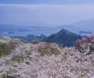 長崎県 桜 大山公園 の写真素材 [FYI04312064]