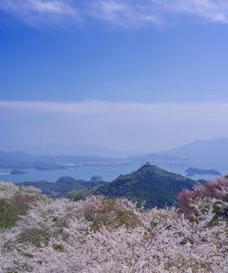 長崎県 桜 大山公園 の写真素材 [FYI04312065]