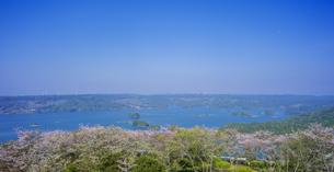 長崎県 桜 大山公園 の写真素材 [FYI04312072]