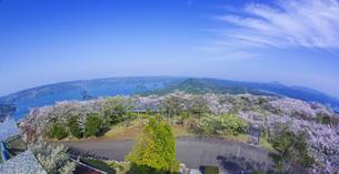 長崎県 桜 大山公園 の写真素材 [FYI04312074]