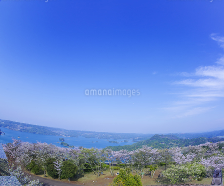 長崎県 桜 大山公園 の写真素材 [FYI04312075]
