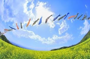 菜の花畑と鯉のぼりに太陽の写真素材 [FYI04312270]