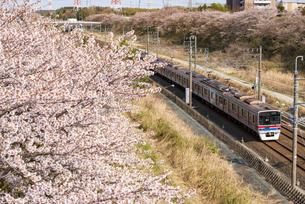 満開の桜並木を走る北総鉄道 下り列車白井駅~小室駅の写真素材 [FYI04312416]