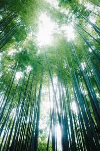 竹林の写真素材 [FYI04312423]