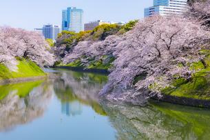 千鳥ヶ淵の桜の写真素材 [FYI04312619]