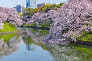 千鳥ヶ淵の桜の写真素材 [FYI04312620]