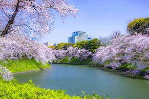 千鳥ヶ淵の桜の写真素材 [FYI04312626]