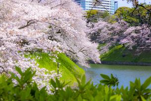 千鳥ヶ淵の桜の写真素材 [FYI04312630]