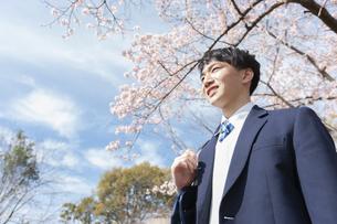 桜を眺める男子学生の写真素材 [FYI04312887]