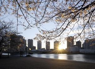 桜の咲く隅田川テラスとリバーシティ21の日の出の写真素材 [FYI04313141]