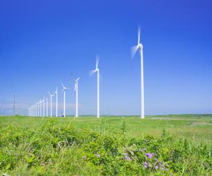 北海道 自然 風景   (青空と風車)の写真素材 [FYI04313469]