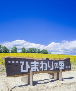 北海道 自然 風景 北竜町 ヒマワリの写真素材 [FYI04313470]