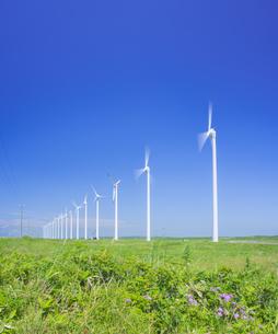 北海道 自然 風景   (青空と風車)の写真素材 [FYI04313472]