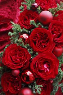 赤いバラとコニファーのクリスマスアレンジメントの写真素材 [FYI04313505]