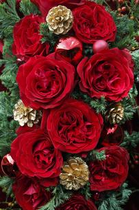 赤いバラと金色の松ぼっくりとコニファーのクリスマスアレンジメントの写真素材 [FYI04313507]