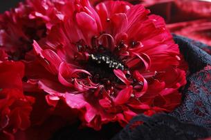 赤い大輪のラナンキュラスの花の写真素材 [FYI04313525]