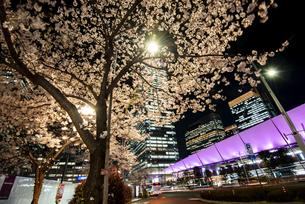 夜桜と東京駅八重洲口の写真素材 [FYI04313532]