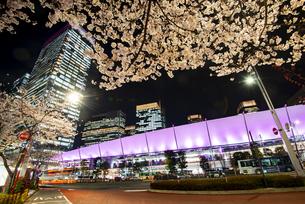 夜桜と東京駅八重洲口の写真素材 [FYI04313536]