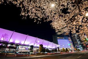 満開の桜と東京駅八重洲口夜景の写真素材 [FYI04313537]