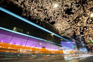 満開の桜と東京駅八重洲口夜景の写真素材 [FYI04313538]