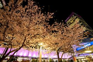 満開の桜と東京駅八重洲口夜景の写真素材 [FYI04313550]