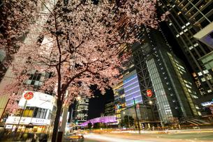 満開の桜と東京駅八重洲口夜景の写真素材 [FYI04313554]