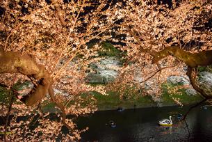 千鳥ヶ淵 夜桜ライトアップとボートの写真素材 [FYI04313652]