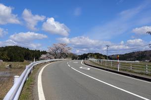 県道6号線に咲く桜の写真素材 [FYI04314017]