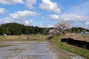 桜咲く田園風景の写真素材 [FYI04314018]